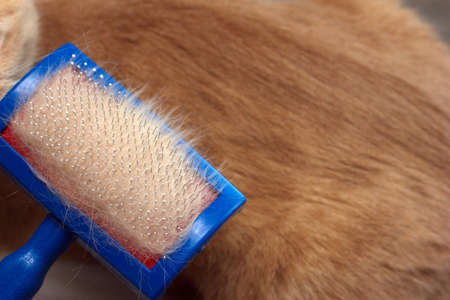 Red cat hair. Cat hair brush with red cat hair on it. Pet care concept. Allergy to animal hair concept.