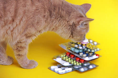 A red cat sniffs medicines that are stacked in a pyramid in blisters on a yellow background. Pet treatment concept. The health of cats. Veterinary services concept.
