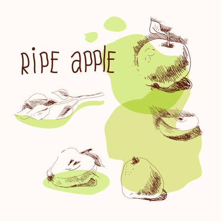 Ripe apple, hand drawing vector illustration