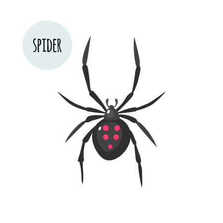 Spider image. Isolated on white background. Vector stock illustration. Ilustración de vector