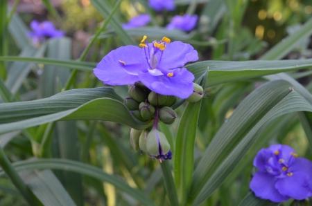 medical  plant: planta medicinal Foto de archivo