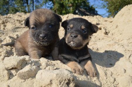 foglie: Puppies