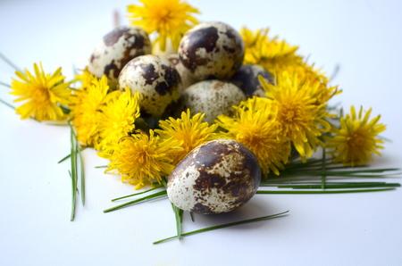huevos de codorniz: Huevos de codorniz y el diente de le�n