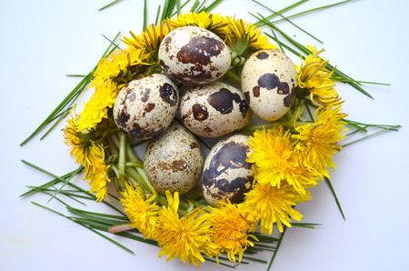 huevos codorniz: Huevos de codorniz y el diente de león