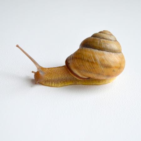 clam gardens: snail Stock Photo
