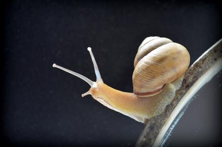 phlegm: snail Stock Photo