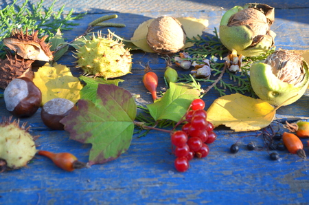 mountain cranberry: autumn still life Stock Photo