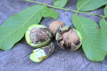 mountain cranberry: Walnuts in a peel
