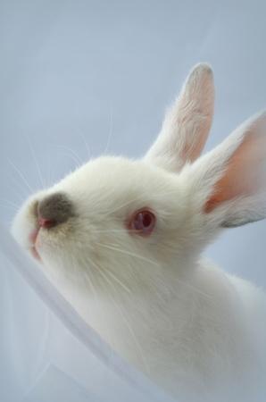 thoroughbred: Thoroughbred brush rabbit