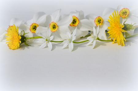 daffodils: ornithogalum, Daffodils