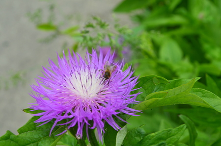 windward: Bee and flover