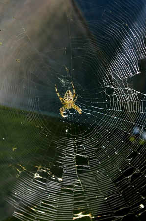 Big spider on a web Stock Photo