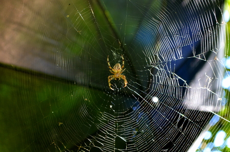great danger: Big spider on a web Stock Photo