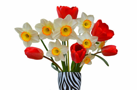 A bouquet of daffodils and red tulips