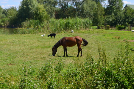 locality: Brown horse on the meadow