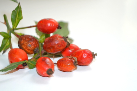 Rosehip is a medicinal plant Stock Photo