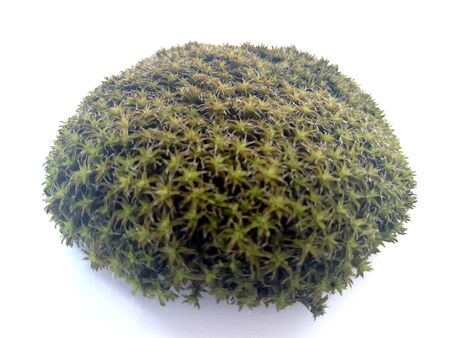 Mosses and lichens are amazing species of plants