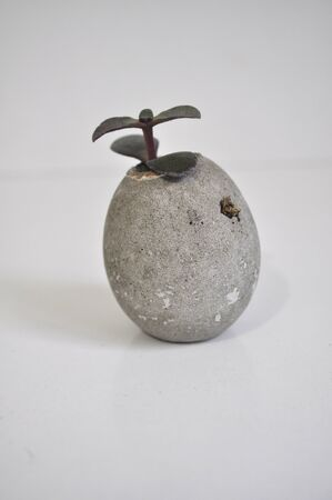Small indoor succulent plant in a concrete planter