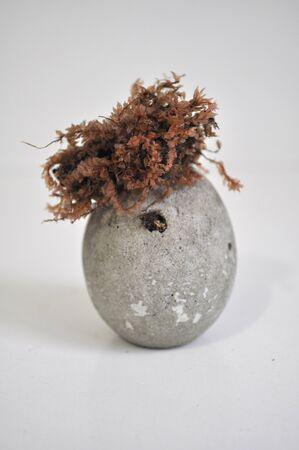 Stabilized moss in a concrete planter Standard-Bild
