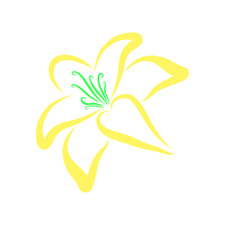 Blooming lily with bright yellow petals, pattern Imagens