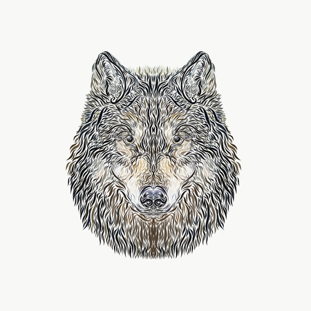 The majestic wolf with piercing eyes , painted smooth lines, on a white background