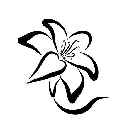 Elegant flower, lily, black contour, stem and petals