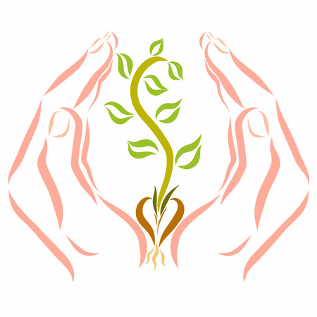Hands protect the seedling that emerged from the seed 스톡 콘텐츠