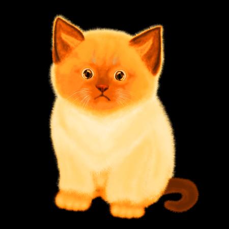 Little cute fluffy kitten on a black background