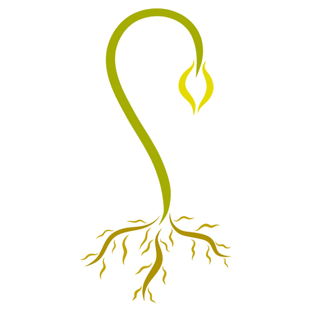 Green tender sprout with roots, young plant