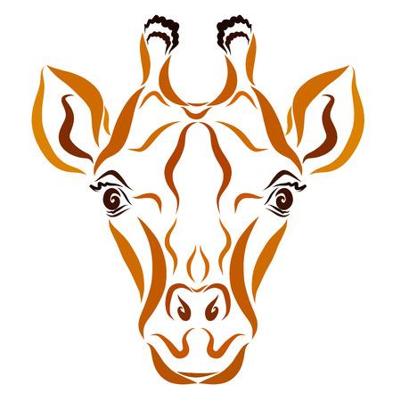 Giraffe head with beautiful eyes, brown pattern