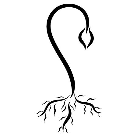 Young sprout with a root, black lines