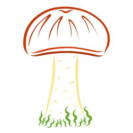 wild mushroom with a brown cap, edible Stock fotó