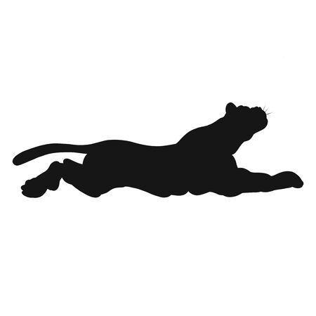 silhouette of a muscular wild big cat lying or jumping