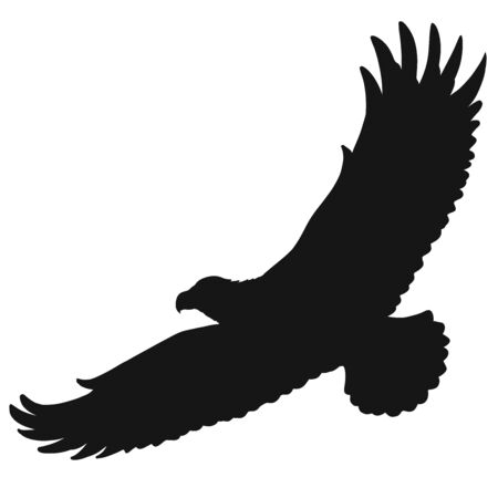 flying wild big bird, silhouette of a soaring eagle Imagens