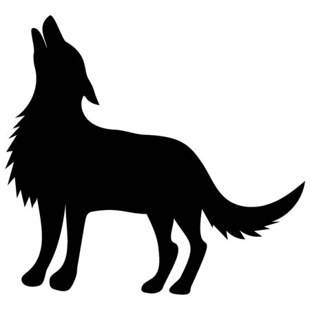 silhouette of a black wolf stands with his head raised and howls 스톡 콘텐츠