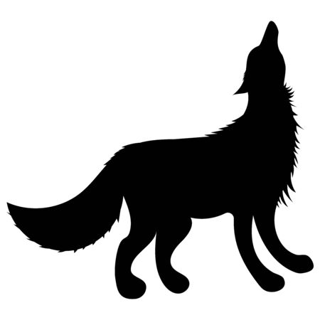 silhouette of a black wolf stands with his head raised 스톡 콘텐츠