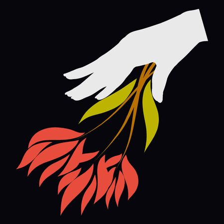 female hand takes or puts a bouquet of fiery flowers