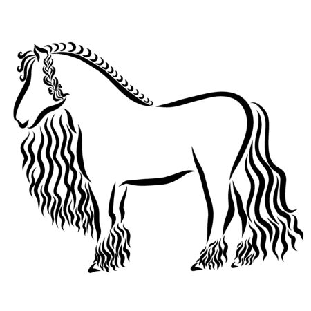 muscular horse with a beautiful hairstyle, braid