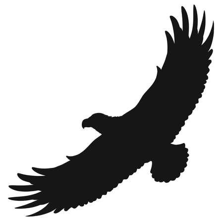 wild free bird of prey soars in the sky Banque d'images
