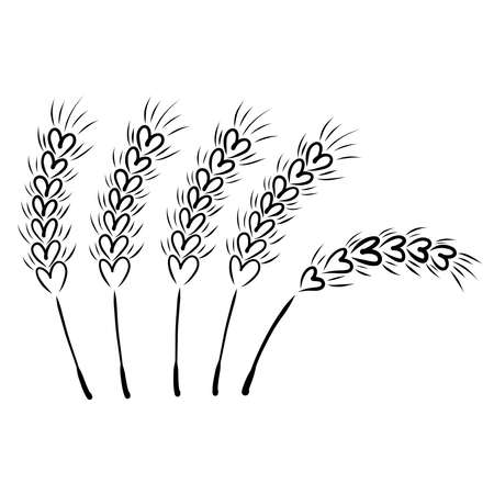 five ripe ears of wheat in the field