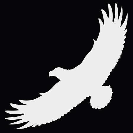 big wild soaring bird, white silhouette on black background