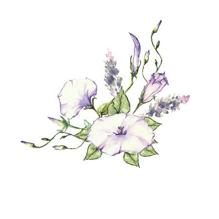 convolvulus: Pink Morning Glory Field Bindweed, Convolvulus arvensis flowers.