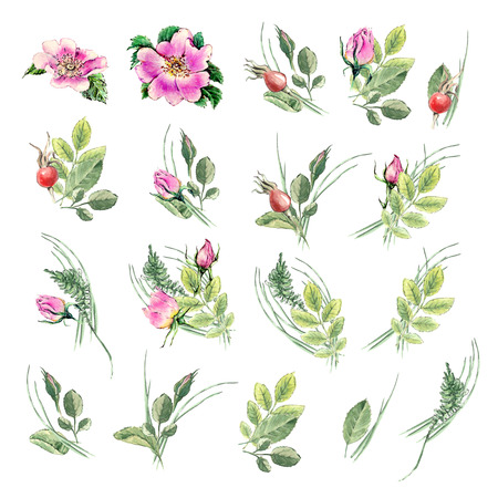 Watercolor vintage floral set. Spring or summer decoration floral bohemian design. Watercolor isolated. There are poppy, wheat, rose, lavender. Stock Photo