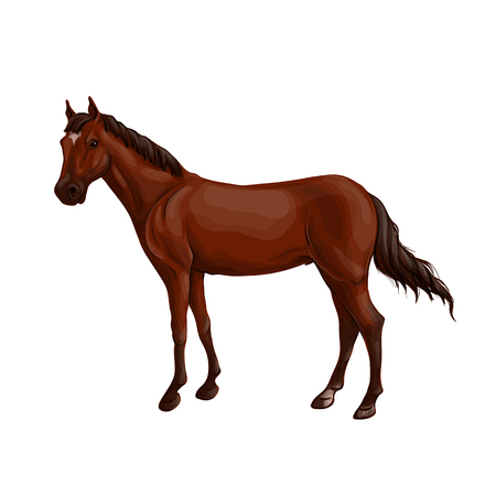 A horse stands, fawn, vector illustration in a realistic style.