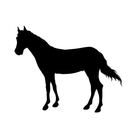 Running beautiful horse black silhouette. Vector illustration.