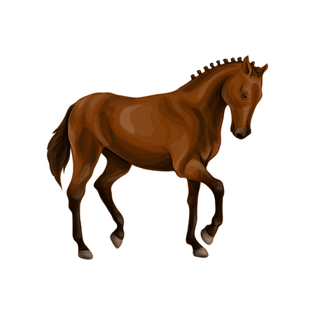 A horse stands, fawn, vector illustration isolated on white background.