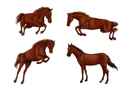 Een set van realistische rennen en springen van prachtige paarden. Vector illustratie