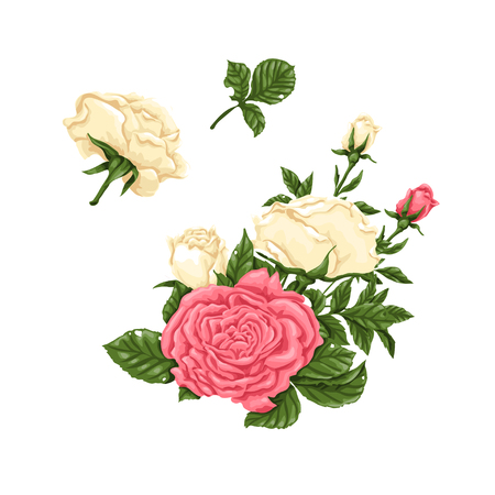 Set of pink and white roses, bouquets, flowers and buds. Vector illustration.