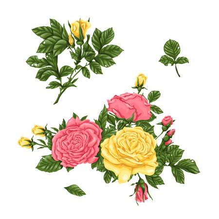 Set of pink, yellow roses, bouquets, flowers and buds. Vector illustration Illustration