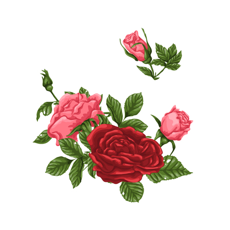 Set of pink and red roses, bouquets, flowers and buds. Vector illustration. Иллюстрация